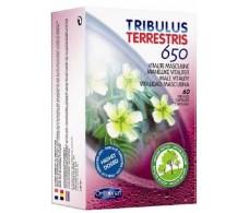 Orthonat Tribulus 60 capsulas.