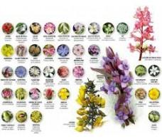 Flores Remedies 30 ml
