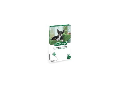 Advantage 40 for dogs up to 4kg. 4 pipettes