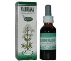Soria Natural Valerian Extract 50 ml.