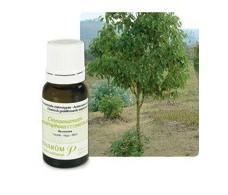 Pranarom Essential Oil Ravintsara Bio (Camphor) 10ml.