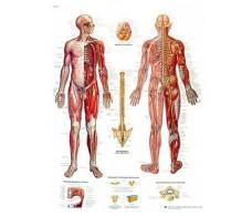 Print 3B Rehab Nervous System