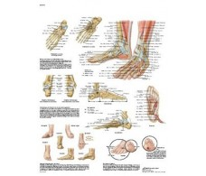 Print 3B Foot and Ankle Rehab