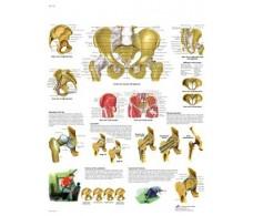 Print 3B Pelvis and Hip Rehab