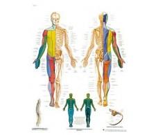 Print 3B Rehab Peripheral Nervous System