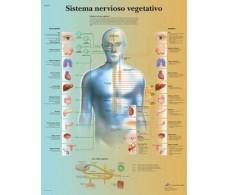 Print 3B Rehab Vegetative Nervous System