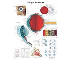Print 3B Rehab The Human Eye