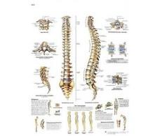 Print 3B Spine Rehab