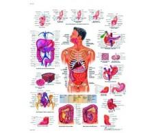 Print 3B Digestive Rehab