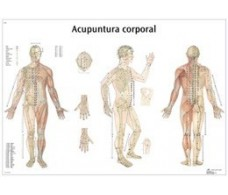 Print 3B Acupuncture Body Rehab