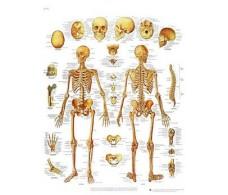 Print 3B Rehab The Human Skeleton