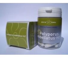 Polyporus umbellatus. Ecological. 62 capsules
