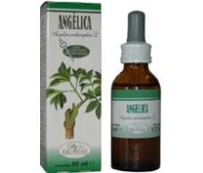 Soria Natural Extract of Angelica (diuretic, stress) 50ml.